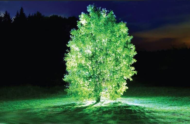 Starlight Avatar: La première plante qui brille dans l'obscurité